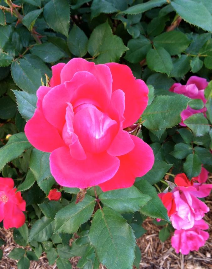 Rose last April