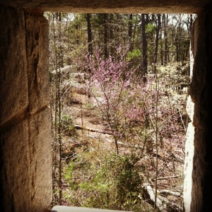 Spring view from an observation tower window