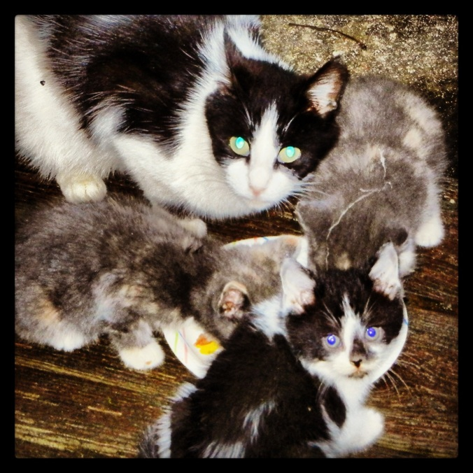 """""""Tiger"""" kittens and mama cat.  The flash reacted interestingly with their eyes."""