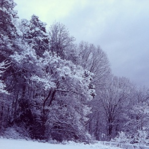 View in my back yard with nine inches of snow
