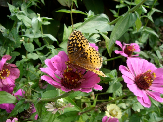 Flowers & butterfly at Biltmore Gardens