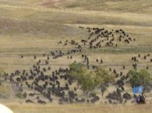 buffalo-roundup-crazy-horse-rushmore-039