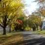 the-cove-blue-ridge-backyard-187